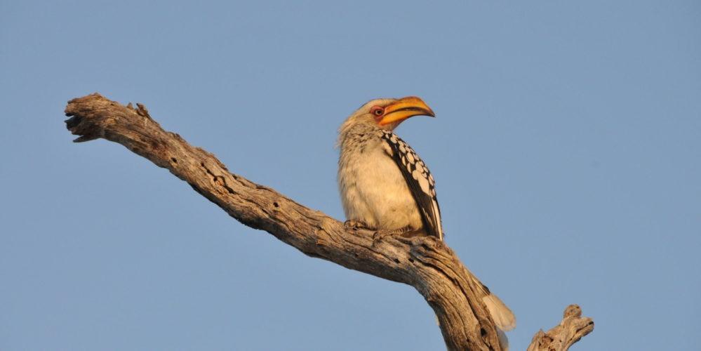 Ecotraining hornbill