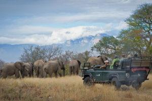 Pridelands-Camp-Elephant-Herd
