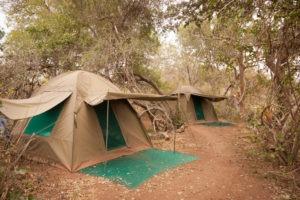 Pridelands-Camp-Tent