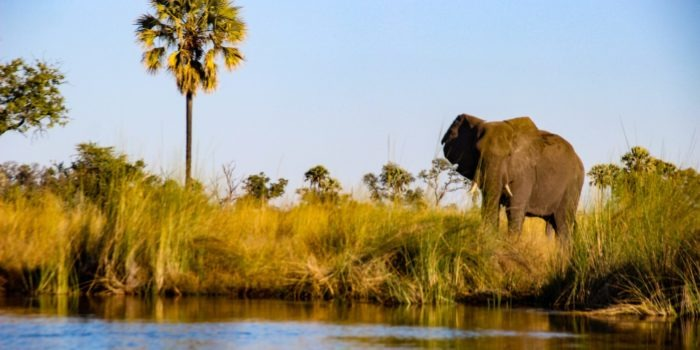 Trans Okavango boating expedition big five viewing