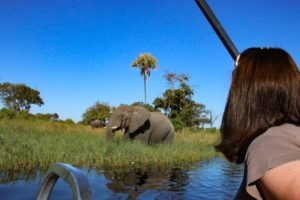 Trans Okavango boating expedition game viewing