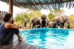 africa on foot pool elephants