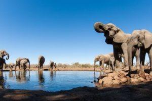 botswana mashatu hide photo safari