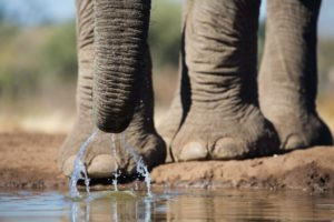 botswana mashatu photo safari close up