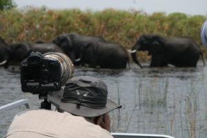 botswana photo safari elephants