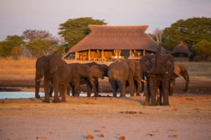 camp hwange elephants