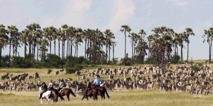 camp kalahari migration horse riding