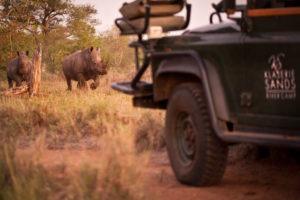 klaserie sands game drive rhino