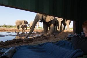 mashatu photo safari hide