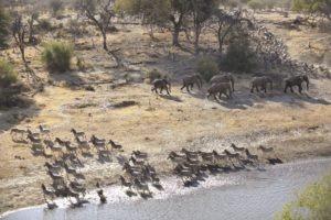 meno a kwena aerial elephants zebra