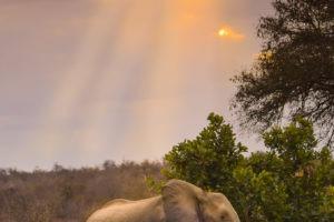 misava safari lodge elephant