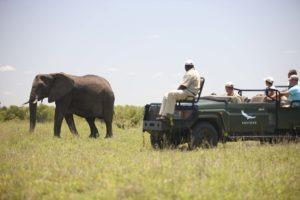 ngala tented camp elephant gamedrive