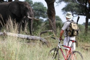 northern tuli botswana cycling safari elephant game viewing