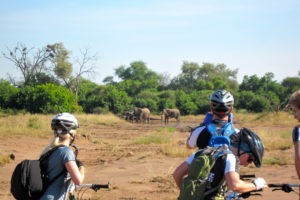 northern tuli botswana cycling safari elephant viewing