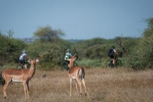 northern tuli botswana cycling safari impala