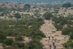 northern tuli botswana cycling safari riding through bush