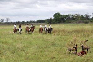 selinda spillway horse riding