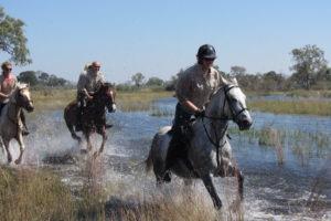 selinda spillway horse riding through water botswana