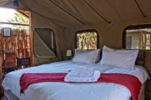 shindzela timbavati tent interior