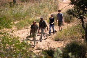 shindzela timbavati walking safaris