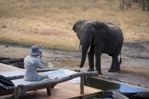 somalisa expeditions hwange elephant pool
