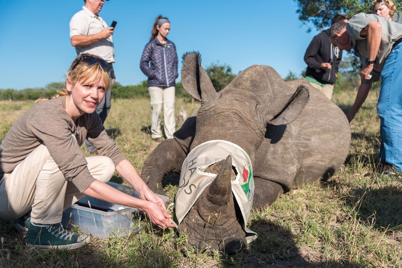 south africa rhino notching steph