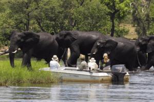 the garden lodge elephants boat chobe