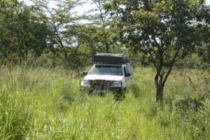 zambia self drive safari grass