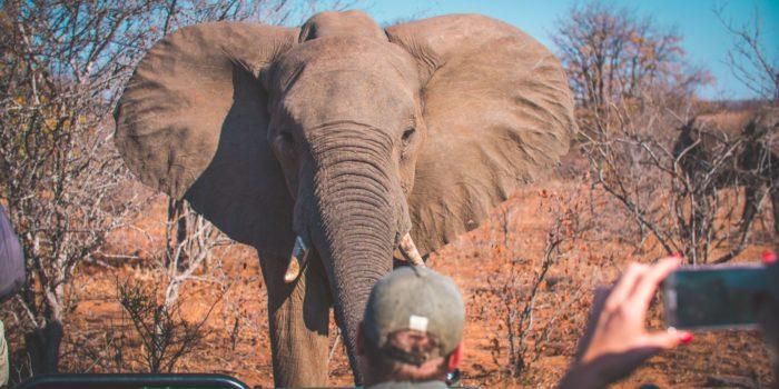 Safari Game Drive Elephant