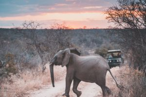 South-Africa-Elephant