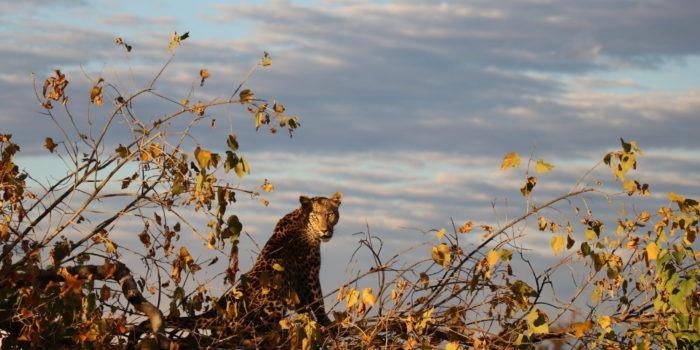 Blog Lisa Leopard1