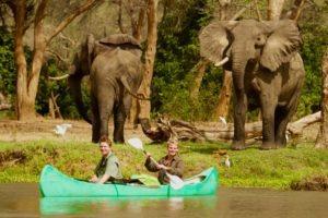 Canoe and Elephant Bulls