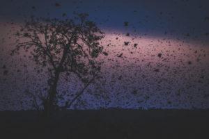 Bat Migration Kasanka dark