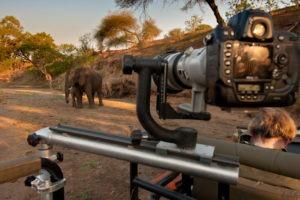 Greater Kruger Park Game Drive Elephant