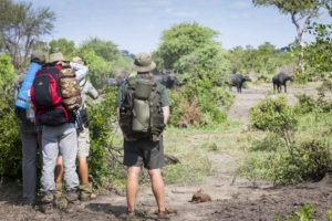 Greater kruger national park tracking on foot