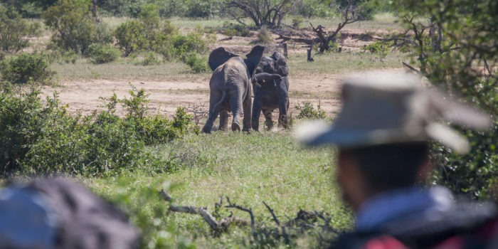 Greater kruger national park tracking wildlife