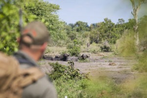 Greater kruger national park walking safari wildlife