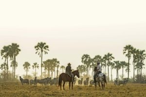 Makgadikgadi Botswana horse riding migration riding