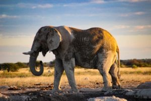 Makgadikgadi Pans Nxai Pans Wildlife Big Five Safari