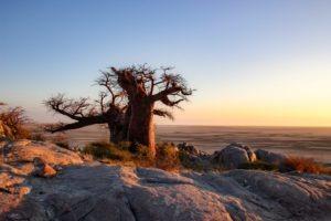 Makgadikgadi Pans Nxai pans sunrise amazing setting