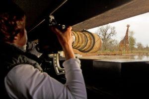 Makuleke Kruger National Park Photography Hide Giraffe