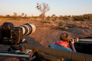 Makuleke Kruger National Park Safari Game Drive Hyena