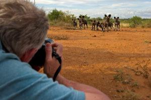 Makuleke Kruger National Park Safari Game Drive Wilddogs