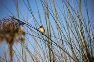 Northern Botswana Chobe Birding Safari