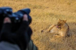 Northern Tuli Mashatu Botswana Big Five Lion Photograpy