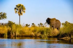 Nothern botswana Boating Elephant