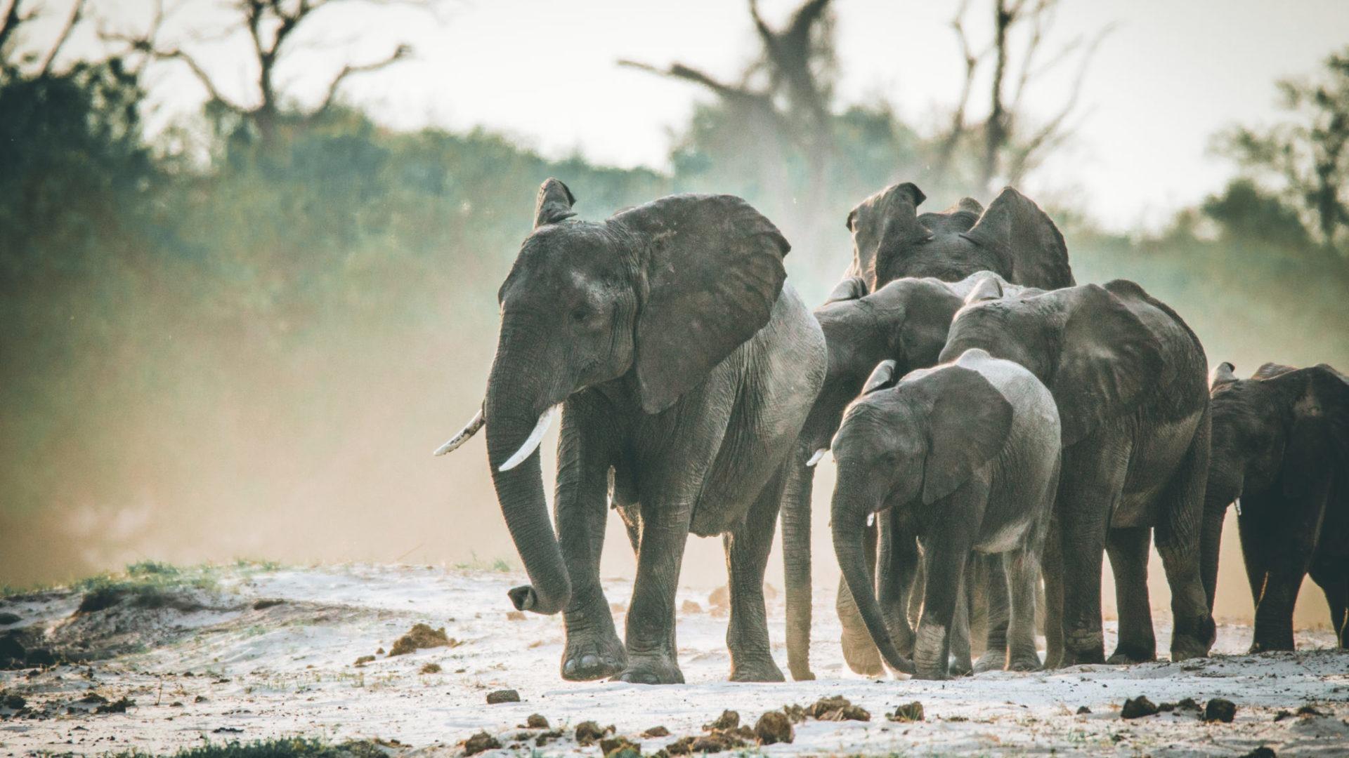 Botswana-Elephant-Family