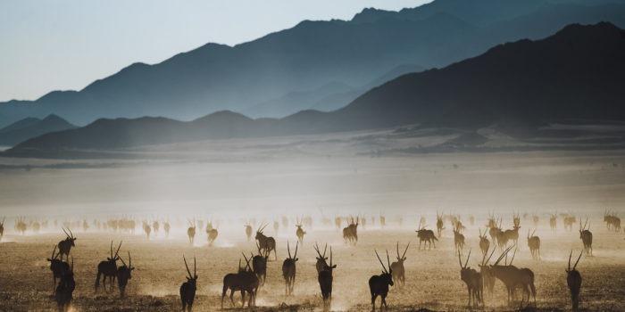 Southern namibia oryx jason and emilie photography safari