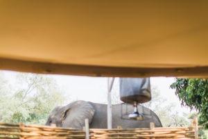 TM Tents ManaMeadowsAug19 034