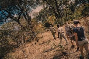Zambia luangwa valley kafunta walking safari